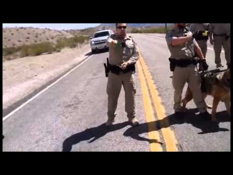 Protesters at Scene of Bundy Cattle Roundup Create Disturbance